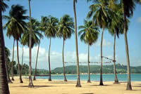 Luquillo Beach Palm Tree lined beach