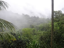 Rainforest Adventure in Puerto Rico