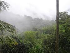 El Yunque – Puerto Rico's Rain Forest
