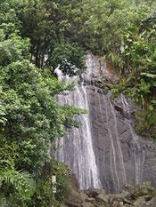 El Yunque Puerto Rico | Tropical Rain Forest El Yunque