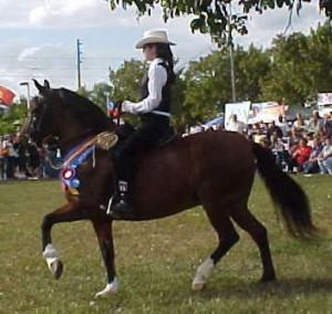 Paso Fino Horses | Puerto Rico Paso Fino