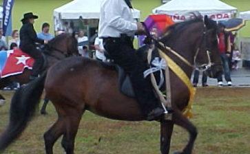 Paso Fino Horses – Puerto Rico Paso Fino