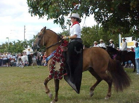 The History of the Paso Fino: a Classical Horse