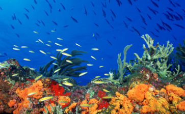 Puerto Rico aims to protect newly discovered reefs