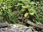 Puerto Rico El Yunque Rain Forest