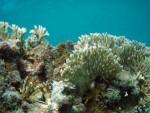 Puerto Rico Reef