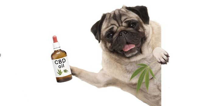 Why and How to Get the Right CBD Oil for Dogs?