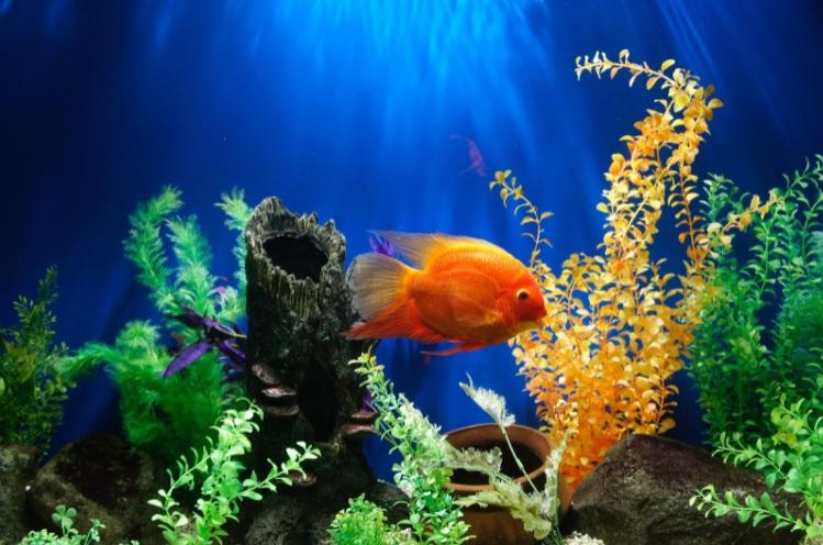 Tips for creating a beautiful feature aquarium