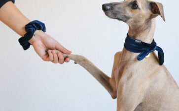 Satos – the Stray Dogs of Puerto Rico