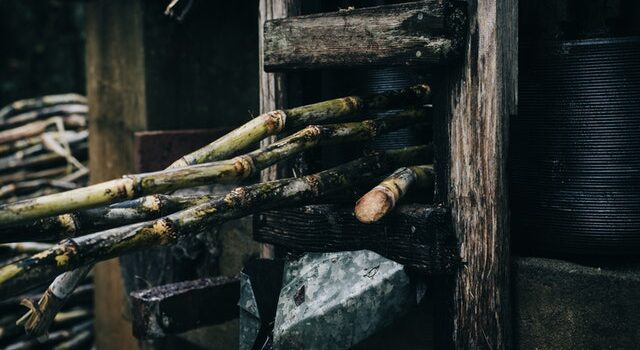 History of the Sugar Industry in Puerto Rico